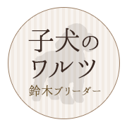 子犬のワルツ 鈴木ブリーダー/